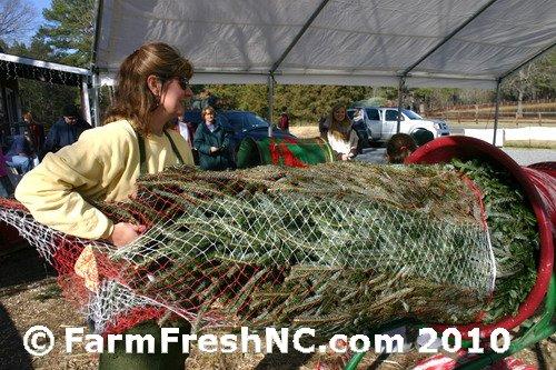 201012_05c_Jordan Lake Christmas Tree Farm |