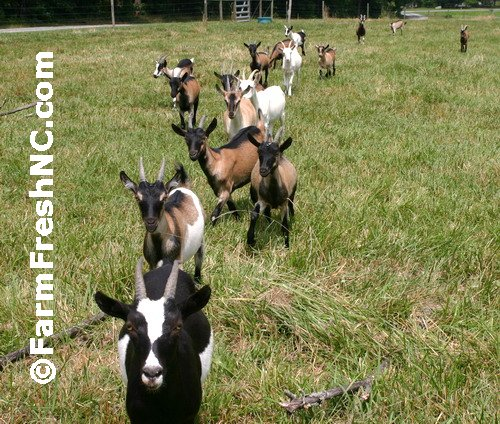 Celebrity Dairy - North Carolina Department of Agriculture ...